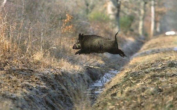 Картинки по запросу охота в заповеднике картинки