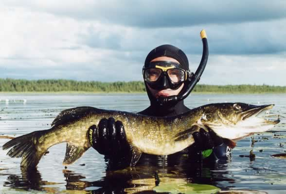 Подводная охота, щука, подводная охота на щуку, охота на щуку, подводный охотник, поведение щуки, подводная охота на щуку в камыше, подводная охота на щуку в толще, техника подводной охоты на щуку