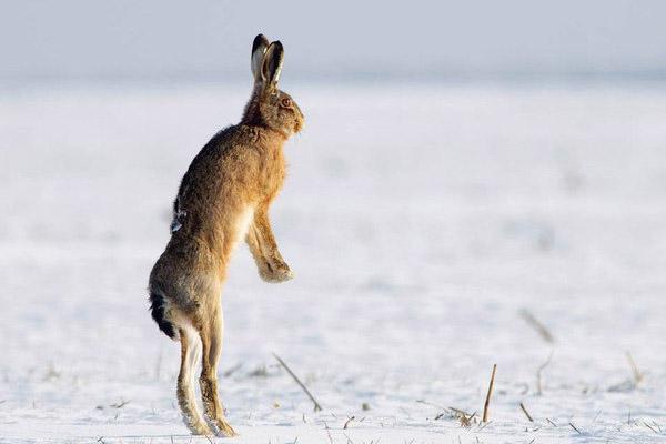 охота, стратегия развития охотничьего хозяйства РФ, охотничье хозяйство, Минприроды, департамент охоты, стратегия сохранения редких видов, охота фото, охота видео, охота 2014, охота бесплатно, бесплатная охота, охота и рыбалка, сезон охоты, охота на гуся, охота в Подмосковье, Охота на Алтае, весенняя охота, осенняя охота, охота на уток, охота на кабана, открытие охоты, открытие охоты 2014, охотник, оружие, охотничьи ружья, охотхозяйство, охотничьи собаки, ружья иж, охота на лося, охота на медведя, охота на зайца
