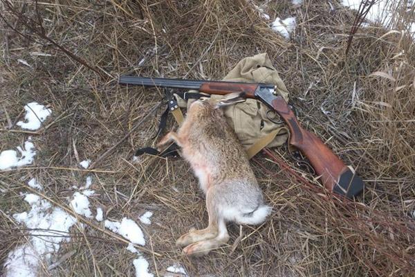 Открытие охоты в Волгоградской области, открытие охоты в Алтайском крае, сроки охоты в Волгоградской области, сроки охоты в Алтайском крае, охота на зайца, охота на лису, охота на кабана, охота на кабана, охота на косулю, охота на лося, охота на пушных, охота на копытных