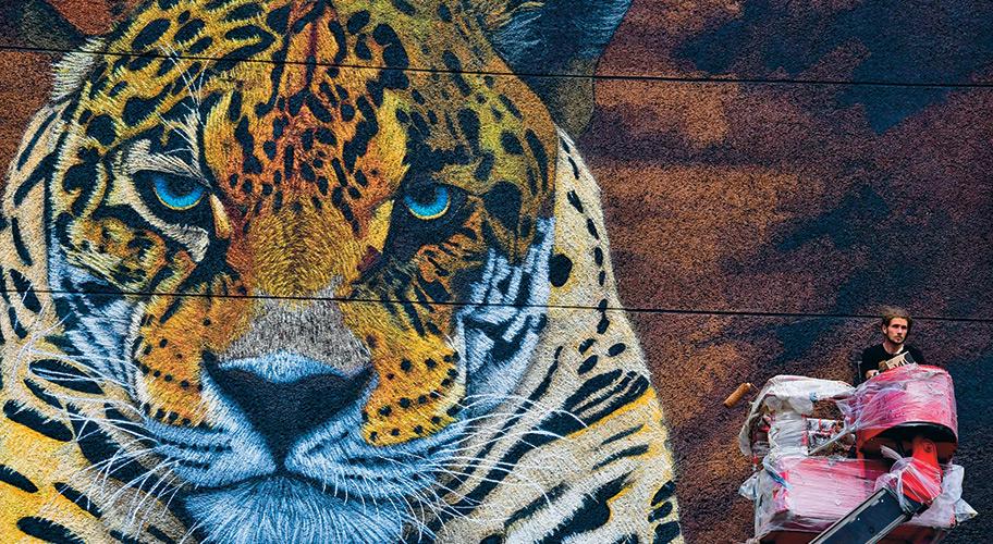 Объявленный Годом экологии 2017-й завершился для защитников природы совсем не радостно — Минприроды утвердило новую реакцию Красной книги, в тревожном списке которой не оказалось 16 исчезающих видов: гималайского медведя, серны, северного оленя, серого гуся, касатки и других. Разгорелся скандал, ученые и общественность обвинили министерство в потакании охотничьему лобби. В результате скандала Минюст не утвердил новую редакцию Красной книги, а вопрос о спорных видах подвешен