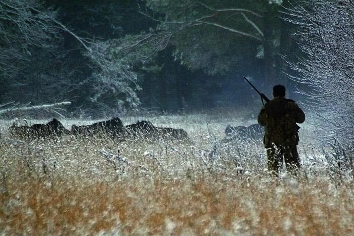 Сроки охоты в Подмосковье на кабана, охота в Московской области, осенне зимний сезон охоты в Московской области 2014 - 2015