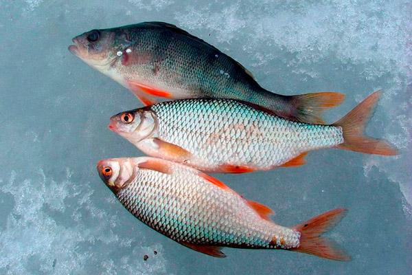 стульчик для зимней рыбалки