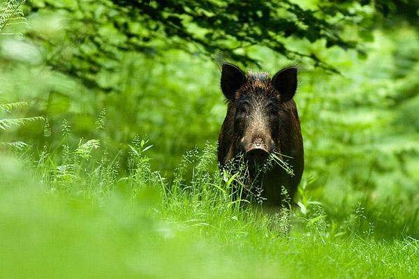 охота в Крыму, охотничьи туры крым, рыбалка в крыму, охота на оленя в крыму, охота на косулю в крыму, охота на кабана в крыму, охота на гуся в крыму, охота на фазана в крыму, орлиновское охотхозяйство, качинское охотхозяйство