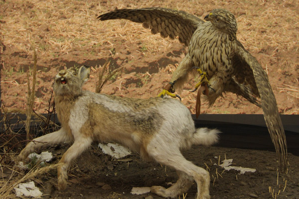 Музей охоты, охотничий музей, музей охоты и рыболовства, музей охоты в Москве, музей охоты в Алтайском крае, охота, таксидермия, оружие, охотничий туризм