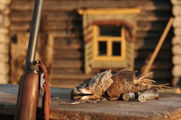 Весенняя охота 2017 в Омской области, Открытие весенней охоты 2017 в Омской области, Сроки весенней охоты 2017 в Омской области, весенняя охота в Омской области на белолобого гуся, весенняя охота в Омской области на утку, охота в Омской области весной, на кого можно охотиться в Омской области весной
