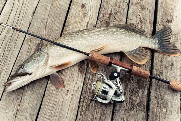 Рыбалка на Волге, рыбалка на Ахтубе, рыбалка в Астрахани, приманки для рыбалки на Волге, насадки для рыбалки на Волге, снасти для рыбалки на Волге, приманки для ловли щуки и окуня, приманки для ловли жереха, приманки для ловли сома и судак, ловля на джиг, ловля на воблера
