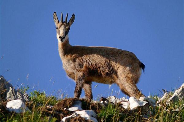 Охота в Карачаево-Черкесии, охота на тура, охота на серну, охота на медведя, сроки охоты в Карачаево-Черкесии, охота в Чувашии, охота в Волгоградской области, учет сурков, учет пернатой дичи, летне-осенний сезон охоты