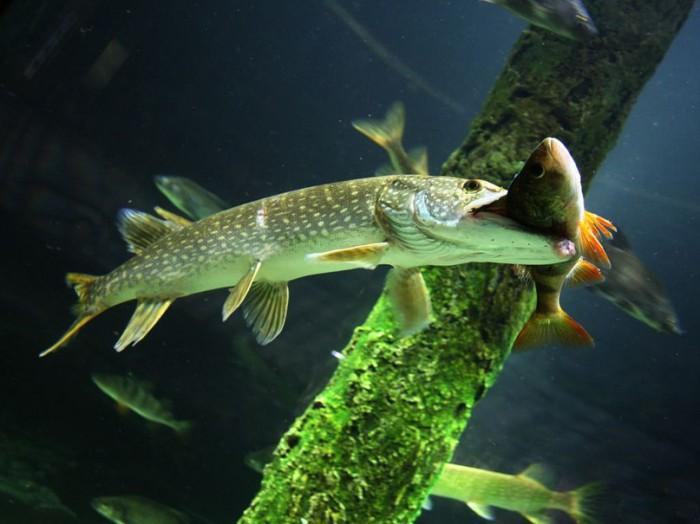 Твистер рыбалка своими руками