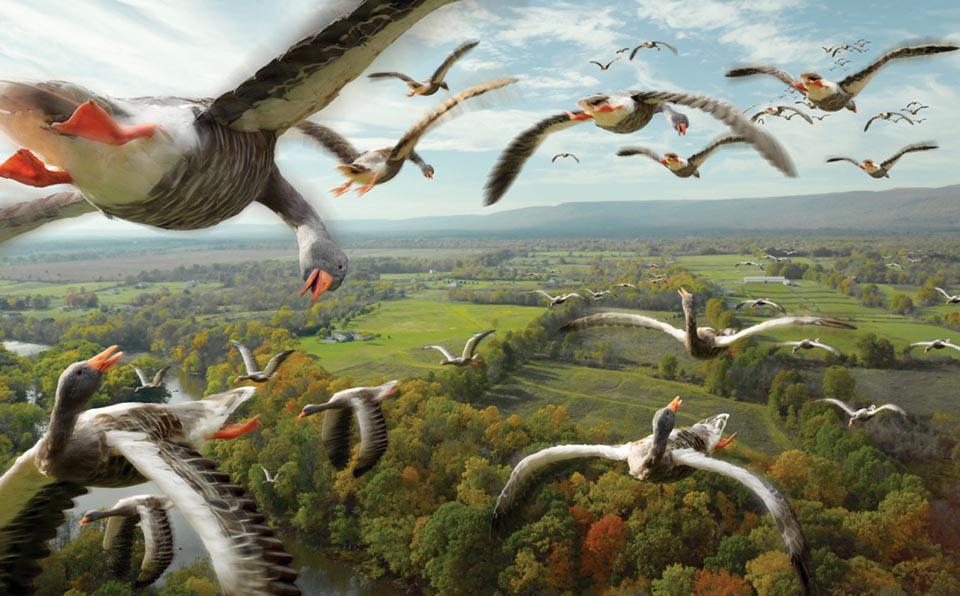 Ориентирование перелетных птиц в пространстве