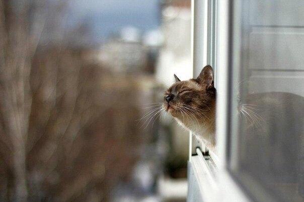 День кошкек в россии
