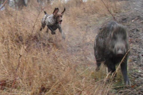 Охота в Крыму, сроки охоты в Крыму, открытие охоты в Крыму, правила охоты в Крыму, охота в Крыму на кабана, охота в Крыму на оленя, охота в Крыму на косулю