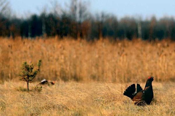 Осенняя охота в Томской области, осенняя охота в челябинской области, открытие осенней охоты в Томской области, открытие осенней охоты в Челябинской области, сроки осенней охоты в Томской области, сроки осенней охоты в Челябинской области