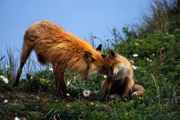 Календарь охотника на май, календарь охотника май , охота в мае, весенняя охота, календарь охотника май, на кого можно охотиться в мае, охотничий календарь на май , календарь охотников, календарь охотника МАЙ , охота на косулю, открытие охоты в мае