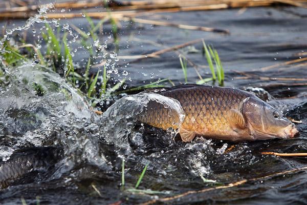 Правила рыбалки в казахстане во время нереста