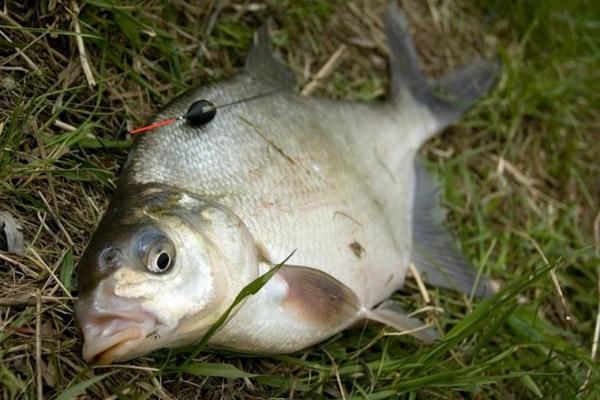 Рыбалка в Беларуси, рыбалка в Приморье, правила рыболовства в Беларуси, ловля сетями. ловля лосося, любительское рыболовство, правила рыболовства