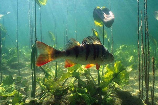 прогноз клева рыбы в энергодаре