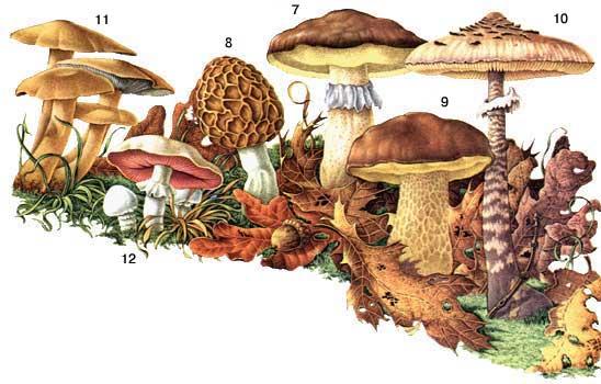 грибы в пензенской области в 2016 году фото