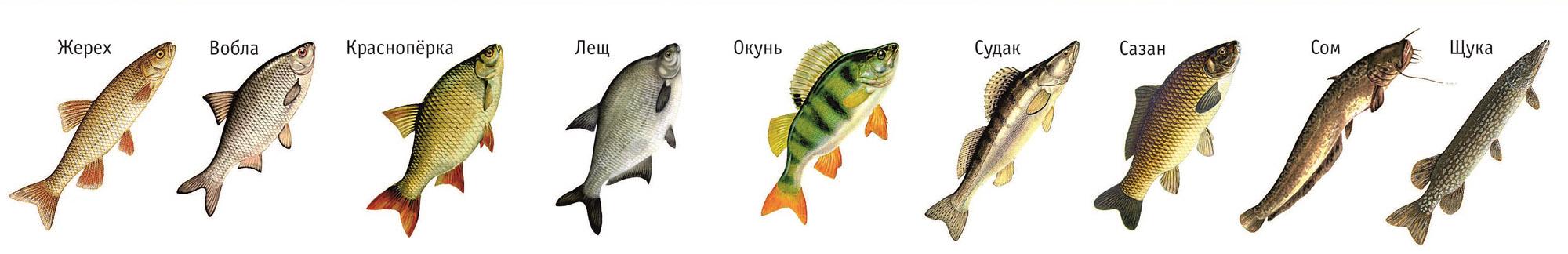 на что клюет рыба в июне