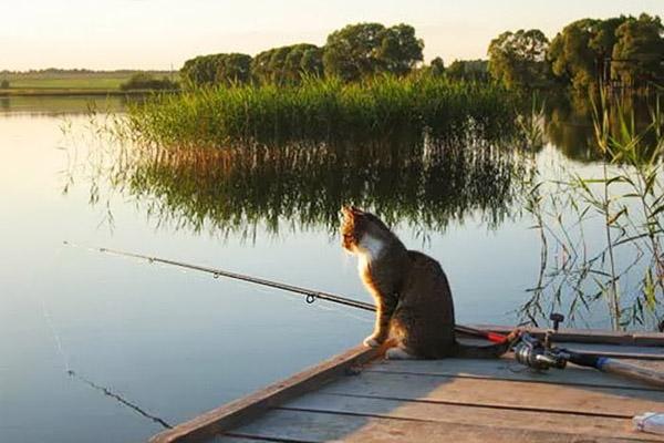 где ловится рыба в калининграде