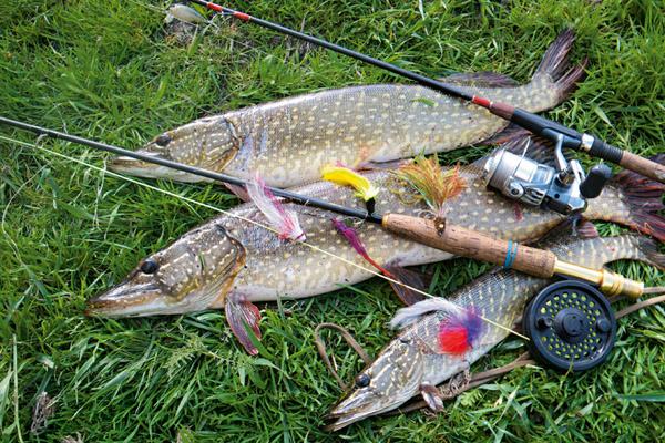 Рыбалка на Волге, снасти для рыбалки на Волге,  на что ловить рыбу на Волге, как ловить рыбу на Волге, лучшие приманки на Волге, календарь рыболова 2013, снасть на щуку, как ловить щуку на Волге, снасти для ловли щуки, ловля щуку на спиннинг, воблеры на щуку, приманки на щуку
