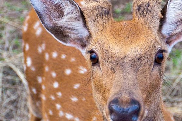 Охота в Самарской области, охота в Улльянновской области, охота в Хакасии, сроки осенней охоты 2014, осенняя охота 2014, охота на оленя, охота на косулю, охота на кабана, охота на соболя, охота на зайца, охота на лося