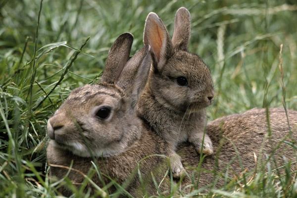 Охота в июне, сроки охоты в июне, на кого охотиться в июне, охота в июне на кабана, охота в июне на оленя, охота в июне на косулю