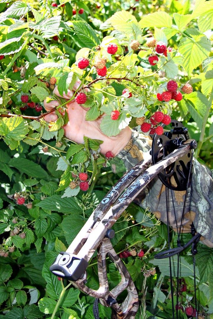 Охотничий блочный лук Интерлопер Ассассин - дешевый лук для охоты с регулируемым фунтажом