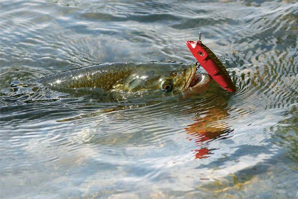 Картинки по запросу ловля рыбы на низком берегу