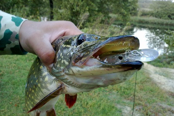 Ловля щуки рыбалка на щуку ловля щуки