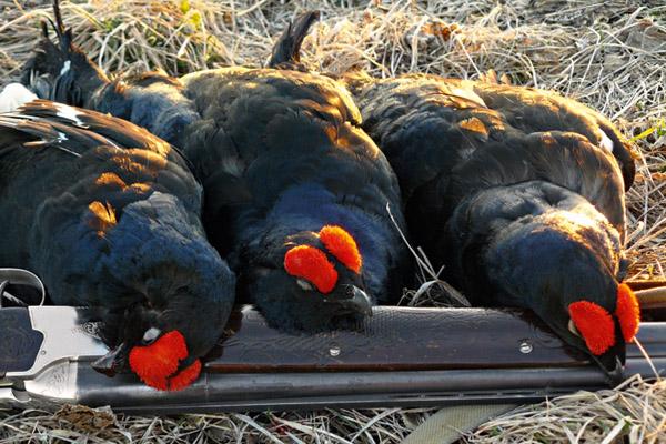 Сроки открытия охоты в Алтайском крае