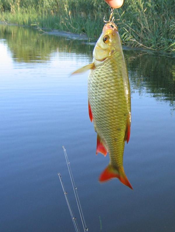 какие прикормки лучшие рыбы