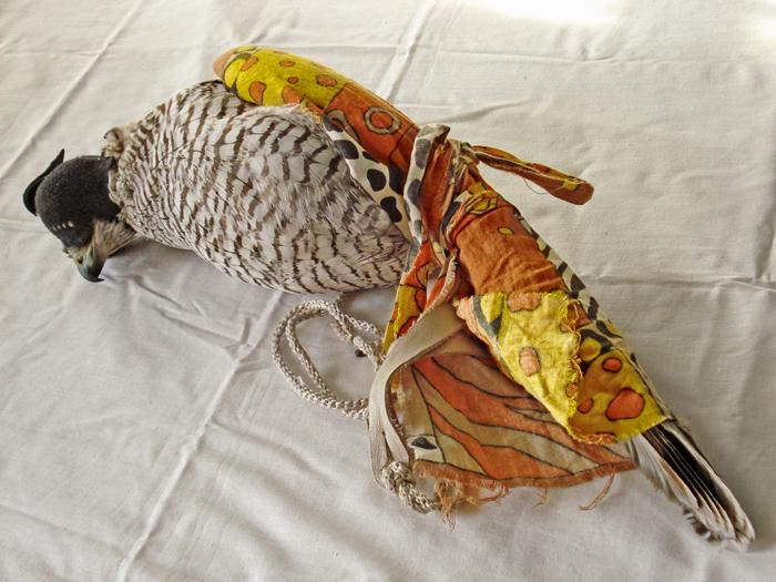 Болезни ловчих птиц и лечение ловчих птиц: Как и чем лечить ловчую птицу, осмотр ловчей птицы