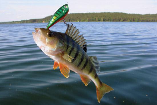 скачать торрент рыбалка на окуня img-1