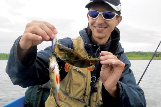 Ловля окуня, рыбалка на окуня, котлы окуня, окуневые котлы, ловля окуня у поверхности, приманки на окуня, поверхностные приманки для ловли окуня, проводка на окуня, ловля окуня на попперы, ловля окуня на уокеры, спиннинг для ловли окуня