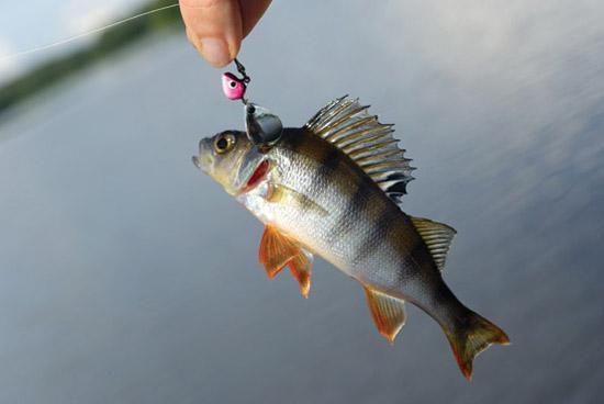 скачать торрент рыбалка на окуня - фото 2