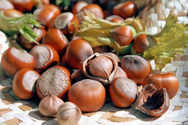 Ореховый Спас: Как праздновать Ореховый Спас, что приготовить на Ореховый Спас, чем полезны орехи