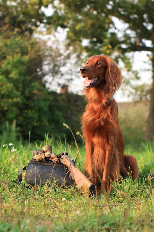 Все об охоте - Охота с легавой собакой