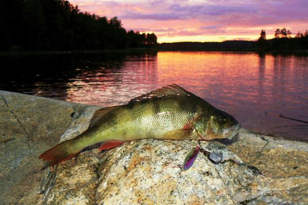 Рыбалка на селигере и волговерховье