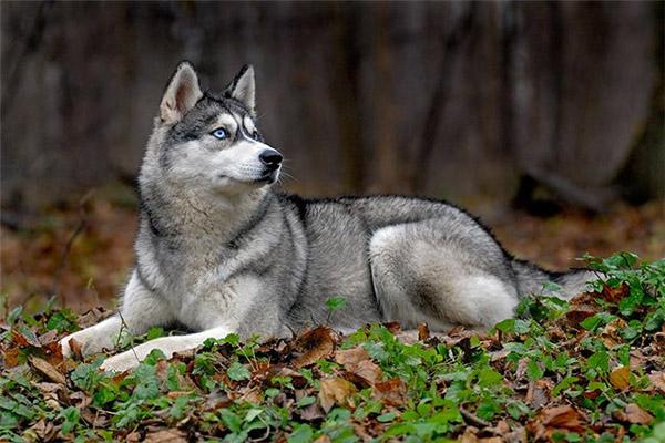 Охота, отстрел собак, дикие собаки, охота на одичавших собак, отстрел одичавших собак, разрешение на охоту на диких собак, отстрел собак в Ленинградской области, дикие собаки