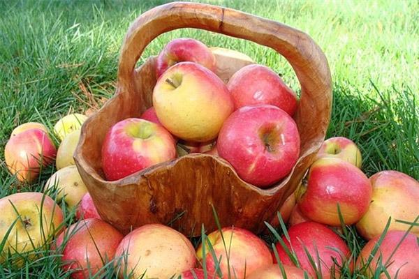 Яблоки, как хранить яблоки, как сохранить яблоки на зиму, как сушить яблоки, как хранить свежие яблоки, как сохранить яблоки зимой, сок из яблок, компот из яблок, яблочные чипсы, уход за садом