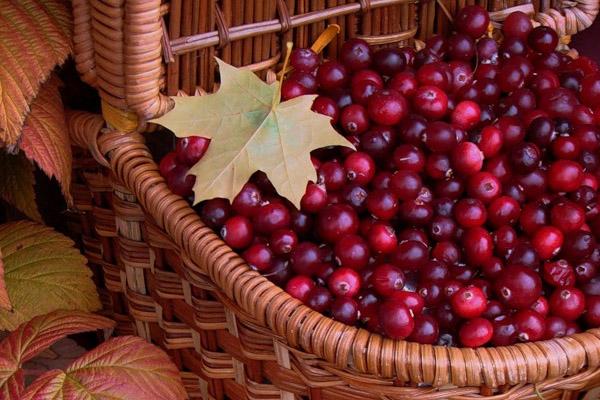 Праздники в сентябре, народный календарь, сентябрь праздники, народные праздники в сентябре, 9 сентября, 10 сентября, 11 сентября, 12 сентября, 13 сентября, 14 сентября, 15 сентября, народные приметы, народный календарь на сентябрь 2013, праздники сентября, что празднуют в сентябре, приметы на сентябрь