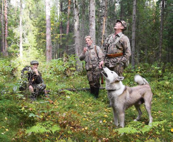 Охотничья собака, как воспитать охотничью собаку, дрессировка охотничьей собаки, какую охотничью породу брать, как приучить собаку, охота, охота фото, охота видео, охота 2014, охота бесплатно, бесплатная охота, охота и рыбалка, сезон охоты, охота на гуся, охота в Подмосковье, Охота на Алтае, весенняя охота, осенняя охота, охота на уток, охота на кабана, открытие охоты, открытие охоты 2014, охотник, оружие, охотничьи ружья, охотхозяйство, охотничьи собаки, ружья иж, охота на лося, охота на медведя, охота на зайца