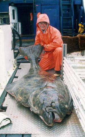 Рекордные рыбы, рыбные рекорды, рекордные рыбы фото, белуга, рекордная белуга, рыбалка, фотографии рыб гигантов, рыбные рекорды книги Гиннесса, самая ценная рыба, самая старая рыба, самая большая рыба, самые ядовитые рыбы, книга рекордов диво, рыбные рекорды России, фото рекордных рыб, книга рекордов рыб
