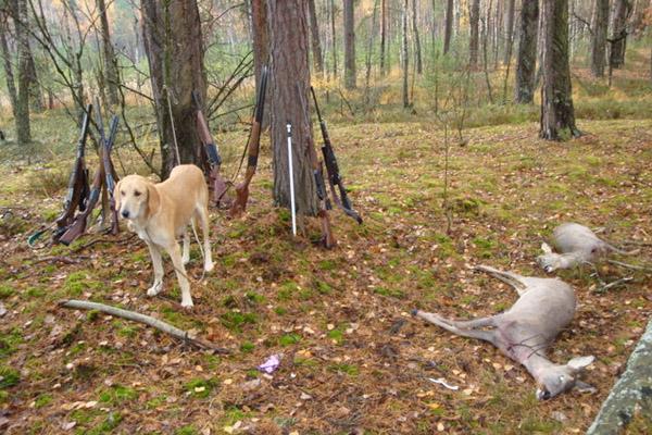 скачать игру про охоту на зверей через торрент - фото 8