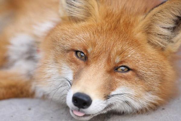 Правила охоты 2014, новое в правилах охоты, сроки охоты 2014, охотничьи собаки, действующие правила охоты,  охота, коллективная охота, разрешение на охоту, охотничий билет, охотники, охотничьи животные, правила охоты на птиц, правила охоты на животных, требования к охоте на копытных, требования к охоте на медведей, требования к охоте на пушных, требования к охоте на дичь, требования к охоте с собаками, требования к охоте с ловчими птицами, ограничения охоты, сроки охоты на копытных животных, сроки охоты на медведя, сроки охоты на пушных, сроки охоты на птиц