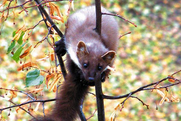 Охота в Пензенской области, охота на Сахалине, охота на кабана, охота на пушных зверей, сроки охоты, открытие охоты, охота 2017
