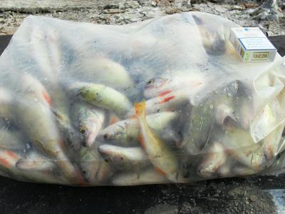 Рыбалка на окуня, ловля окуня, как ловить окуня, ловля окуня на успеновской запруде, успеновка, рыбалка в Челябинской области