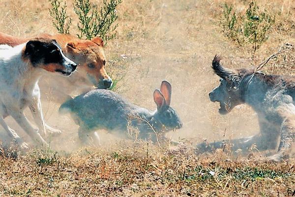 скачать игру про охоту на зверей через торрент - фото 2