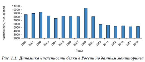 Численность белки в России 2005-2015